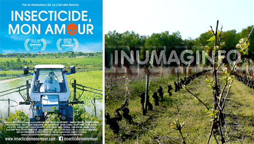 magazine information video inumaginfo